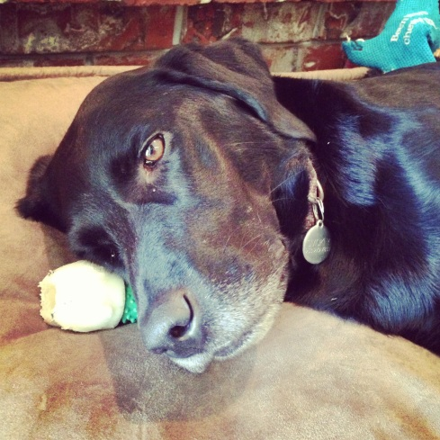 smokey dog bone pillow